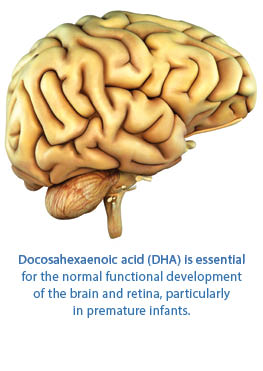 Evolutionary Aspects of Diet: The Omega-6/Omega-3 Ratio and the Brain  Molecular Neurobiology